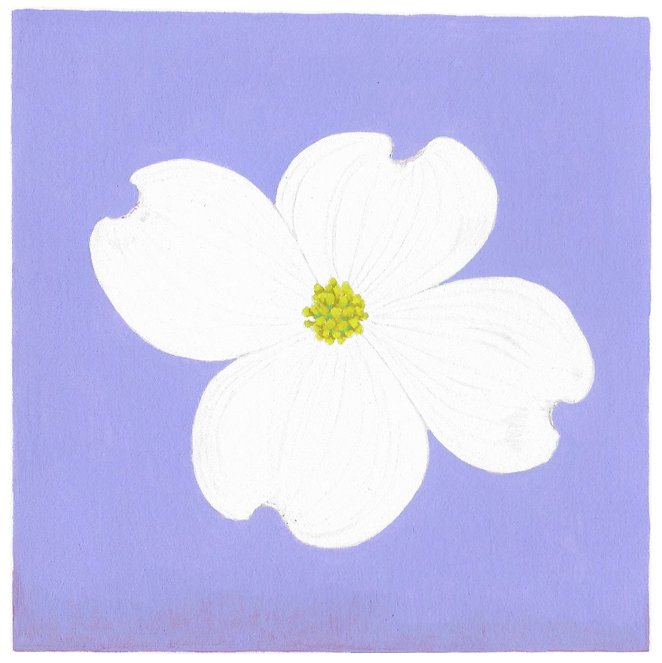 Dogwood , 2017, gouache on Arches paper, 5 x 5 in.