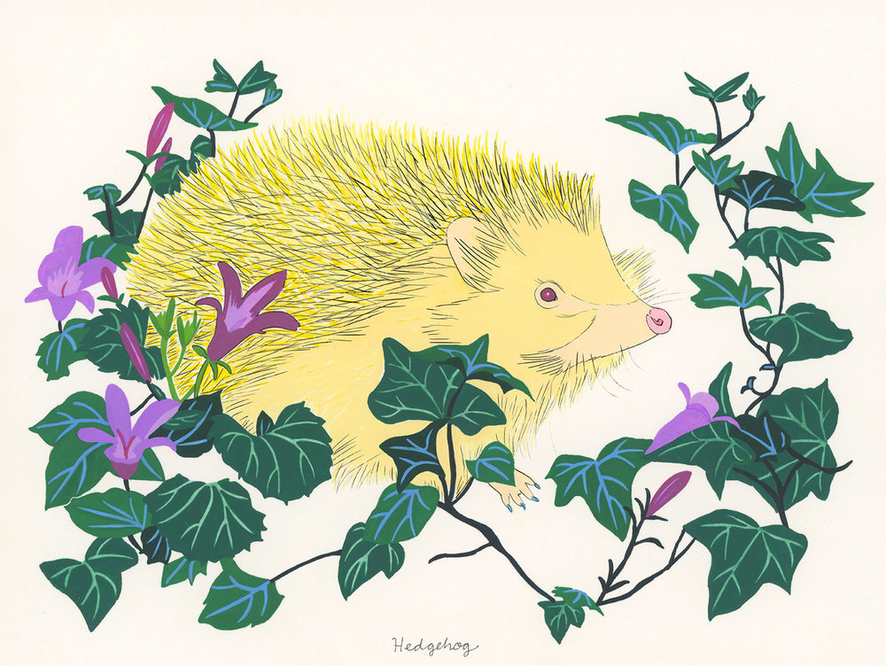 Hedgehog (for the one named Winnie)