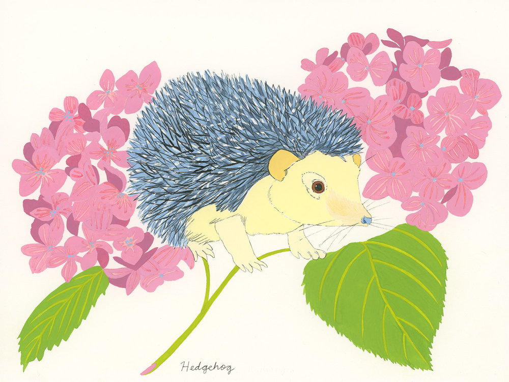 Hedgehog and Hydrangea , 2014, gouache and ink on Arches paper, 6 x 8 in.