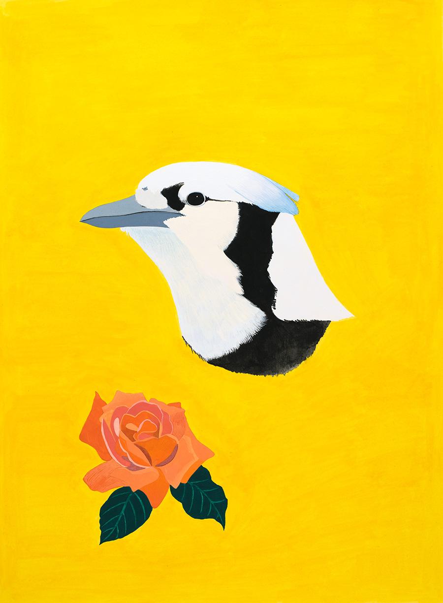 Female Blue Jay