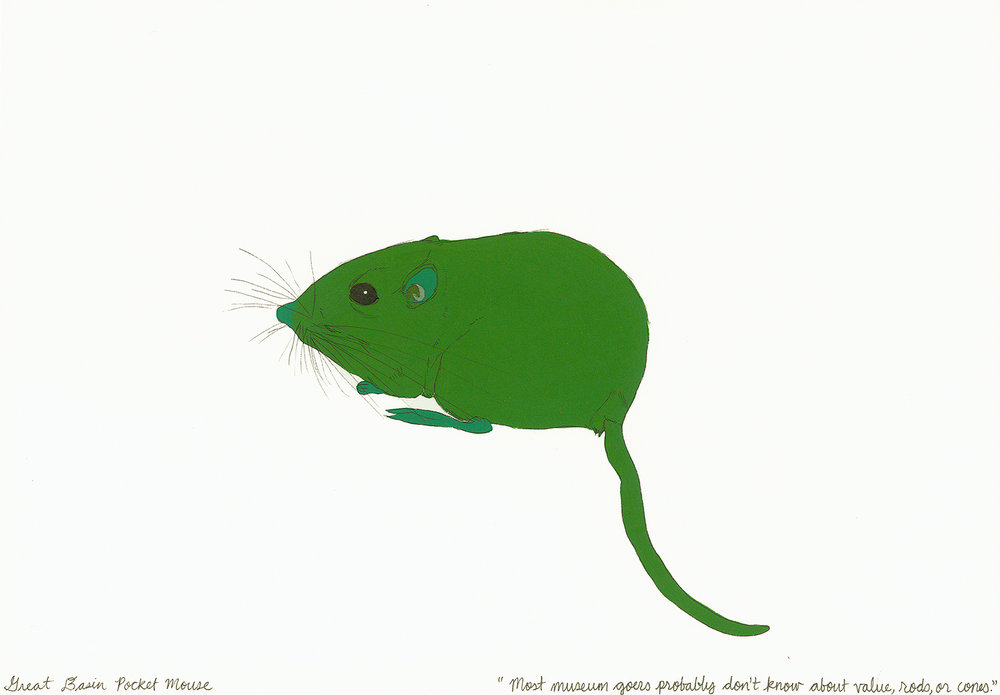 Great Basin Pocket Mouse