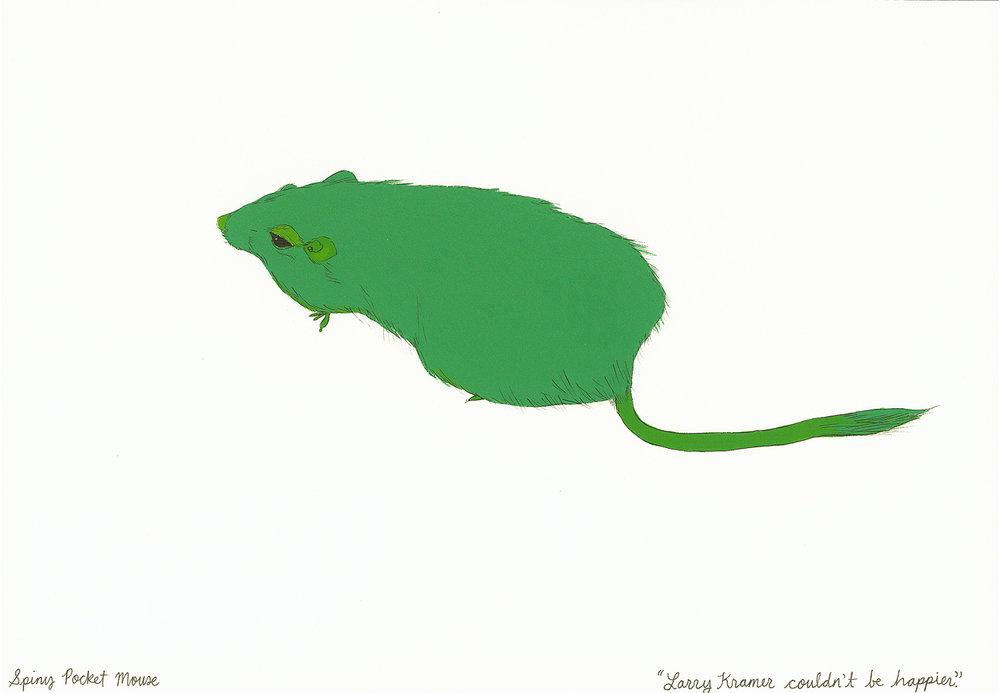 Spiny Pocket Mouse