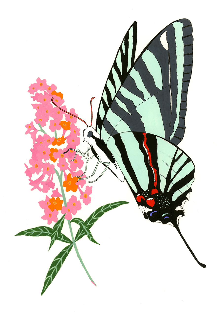 Zebra Swallowtail, 2012, gouache and ink on Arches paper