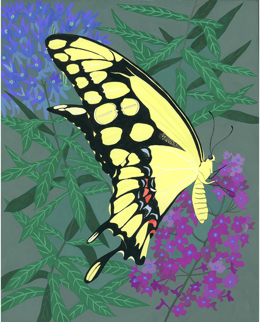 Giant Swallowtail , 2012, gouache and ink on panel