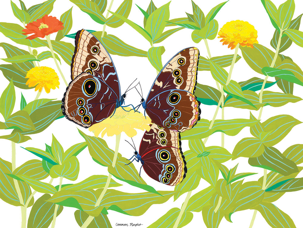 Common Morpho , 2012, gouache and ink on Arches paper, 12 x 16 in.