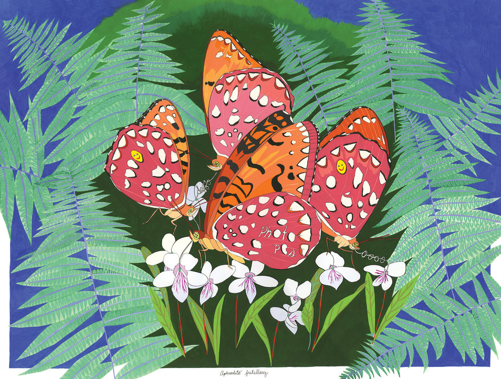 Aphrodite Fritillary , 2012, gouache and ink on Arches paper, 12 x 16 in.
