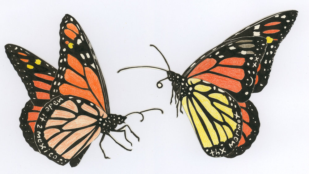Monarchs  from  Butterfly Messages , 2012, ink and colored pencil on cut paper