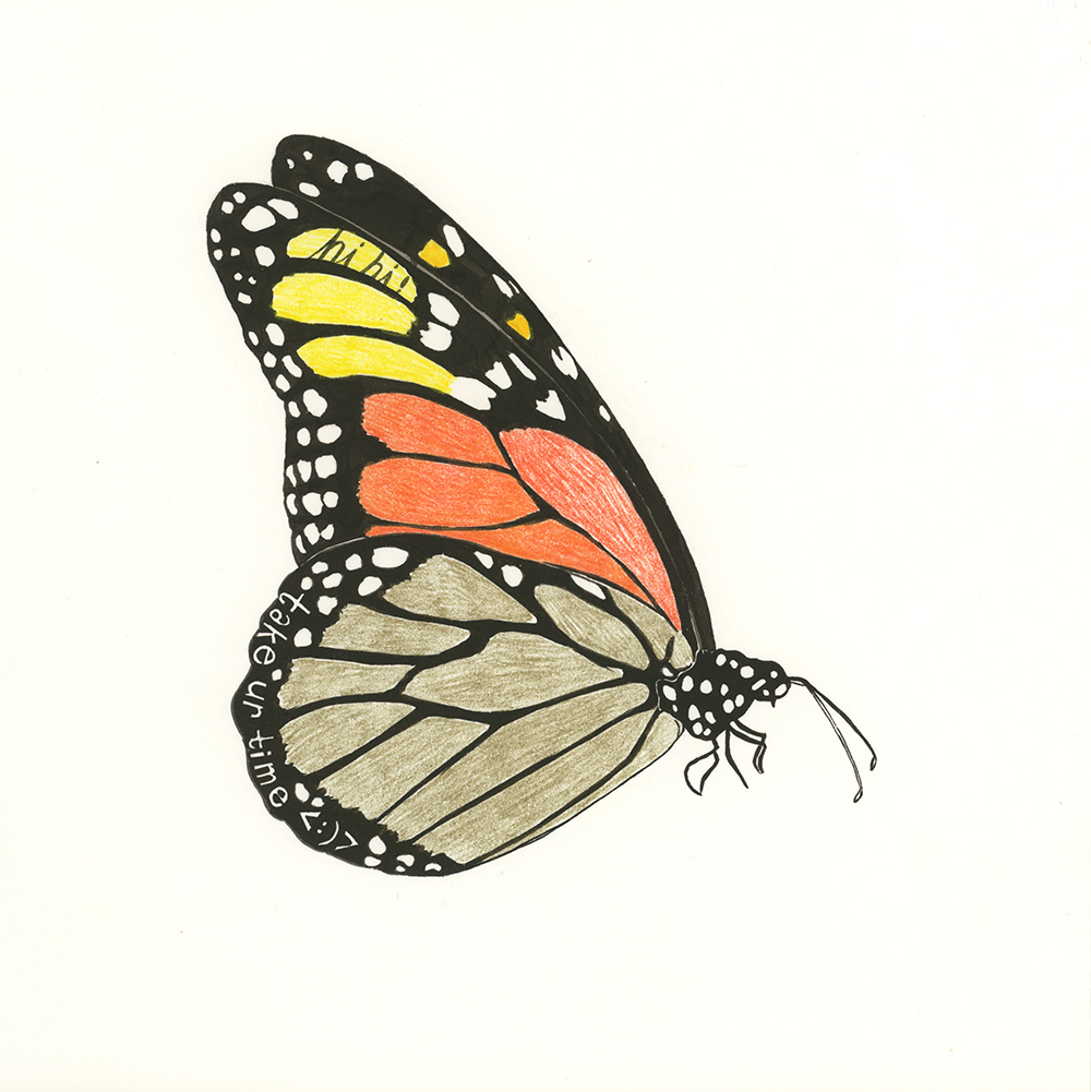 Hi hi  from Butterfly Messages, 2012, ink and colored pencil on paper