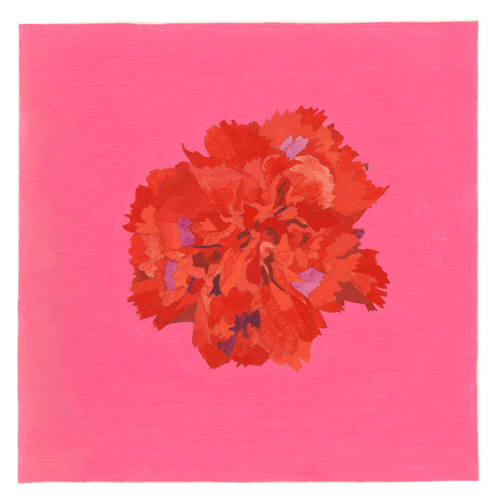 Carnation , 2017, gouache on Arches paper, 5 x 5 in.