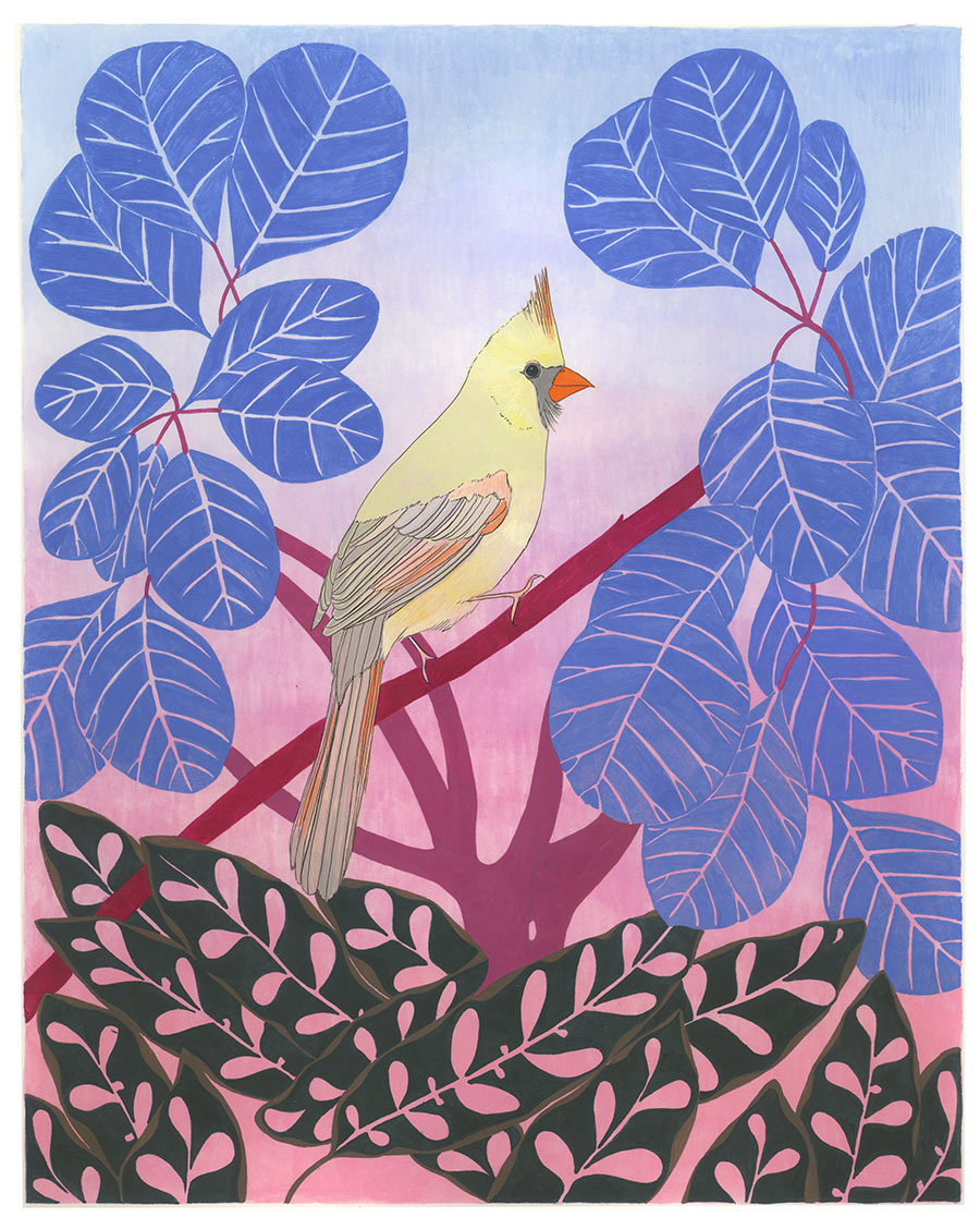 Female Northern Cardinal , 2017, gouache and ink on Arches paper, 8 1/2 x 11 in.