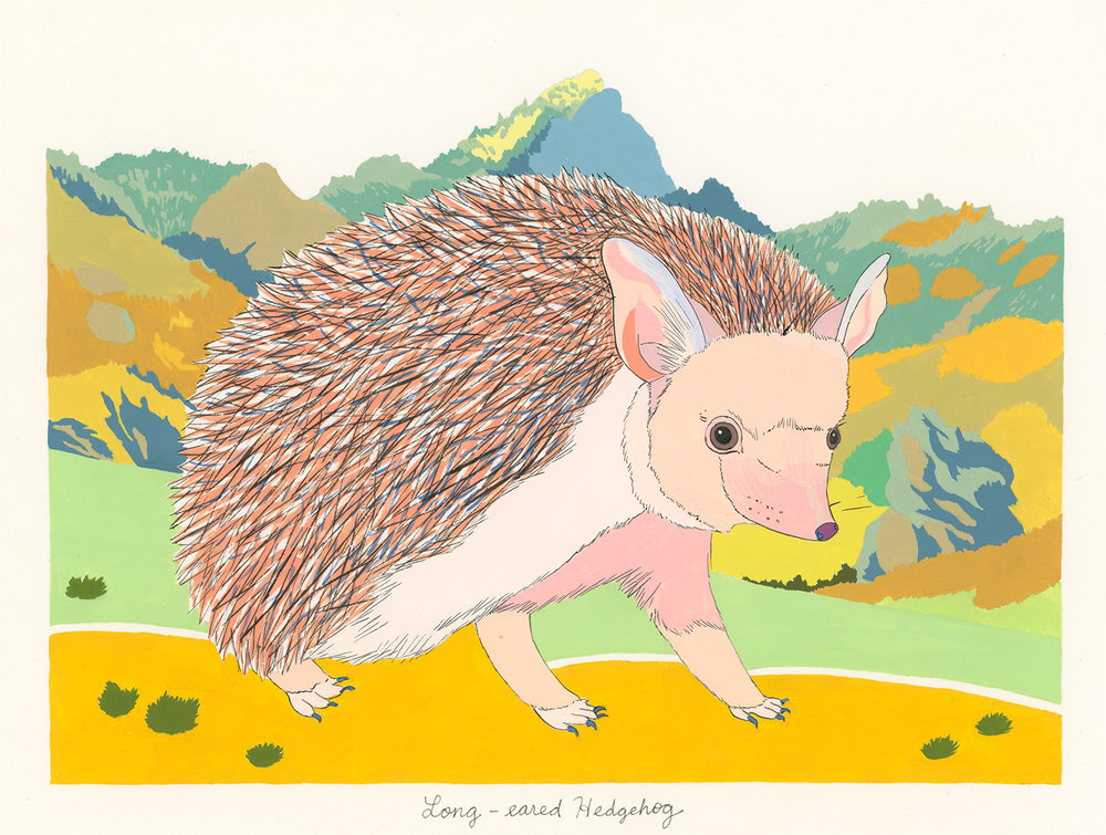 Long-Eared Hedgehog , 2014, gouache and ink on Arches paper, 6 x 8 in.
