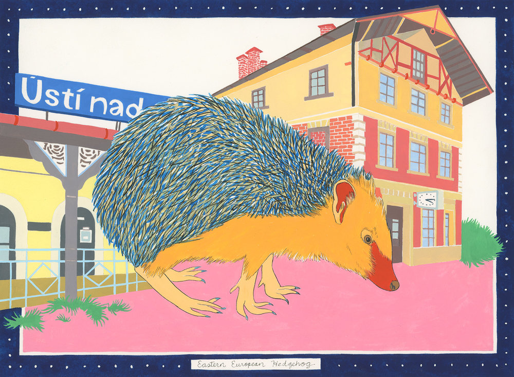 Eastern European Hedgehog , 2015, gouache and ink on Arches paper, 6 x 8 in.