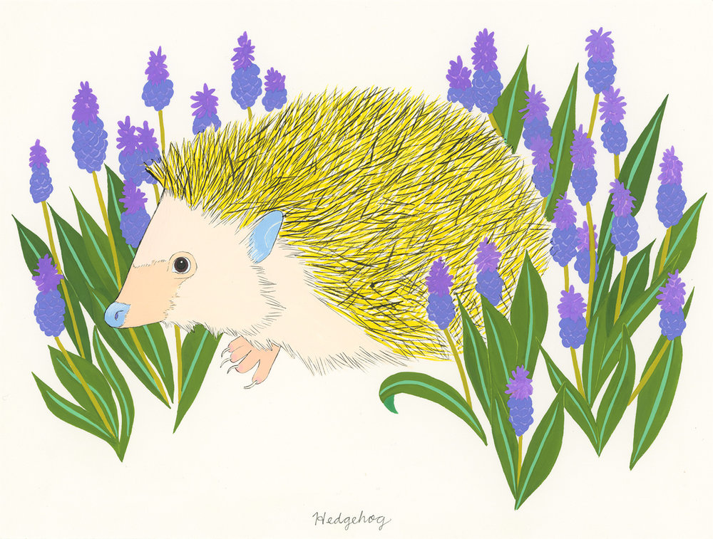 Hedgehog and Hyacinth , 2014, gouache and ink on paper