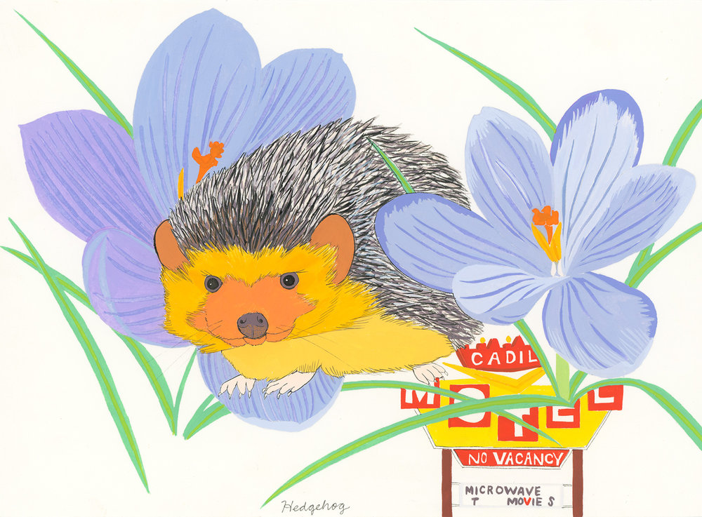 Hedgehog (for the one named Biddy)