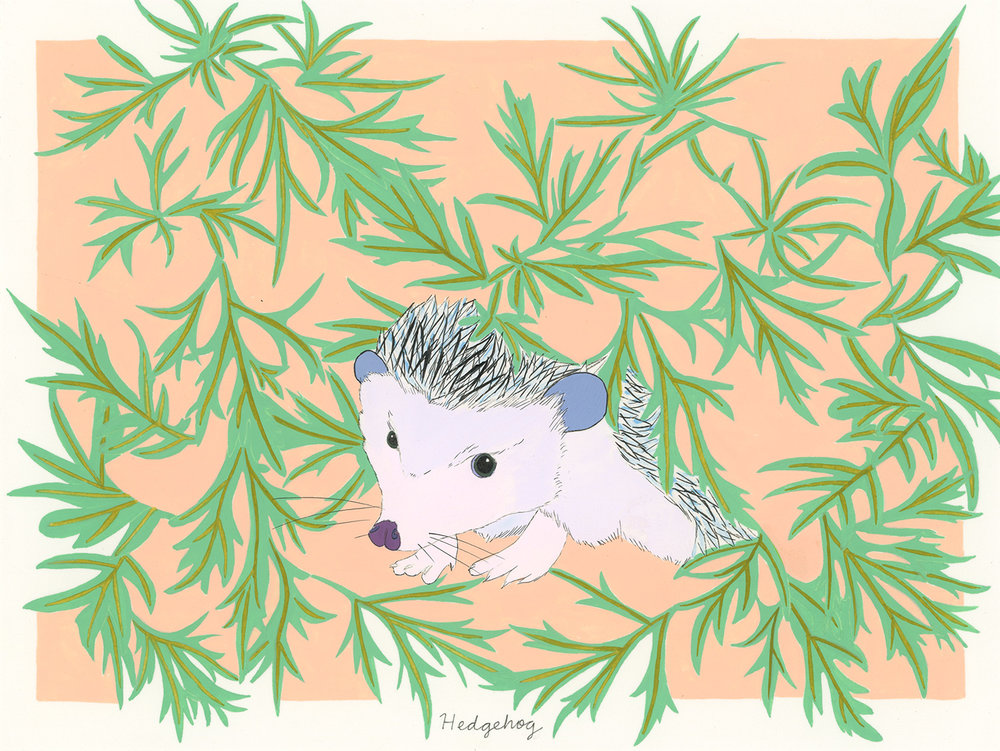 Hedgehog (for the one named Sonny)