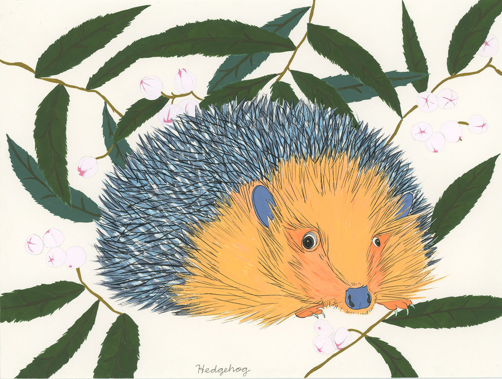 Hedgehog (for the one named Noah)