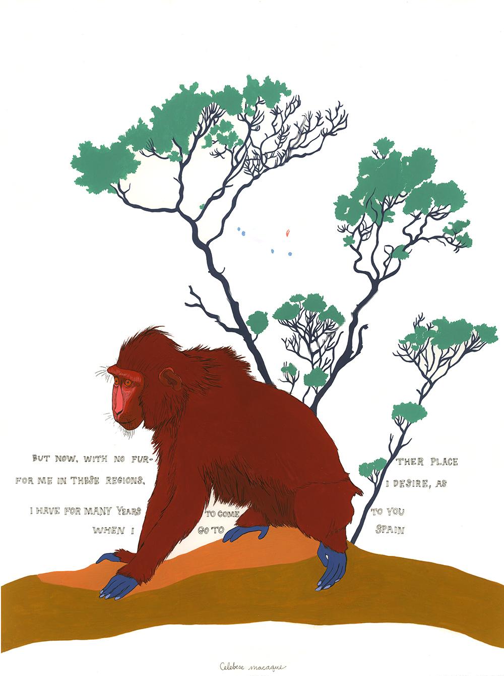 Celebese Macaque
