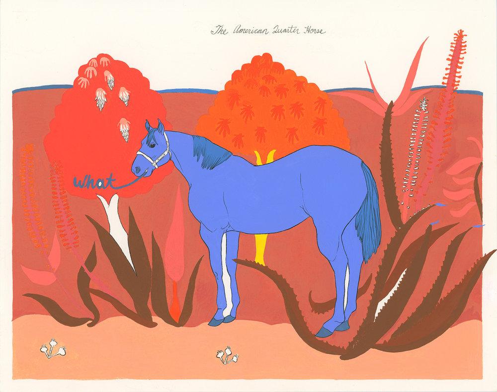 americanquarterhorse.jpg