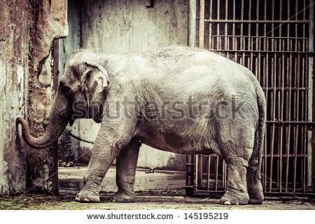 stock-photo-elephant-in-the-zoo-145195219