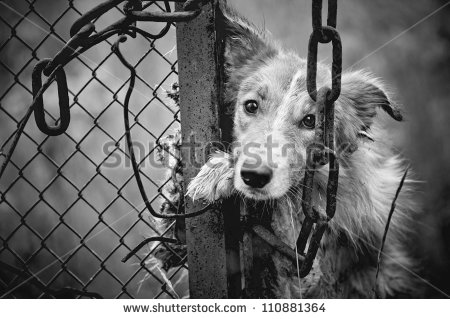 stock-photo-sad-dirty-dog-black-and-white-on-fence-110881364