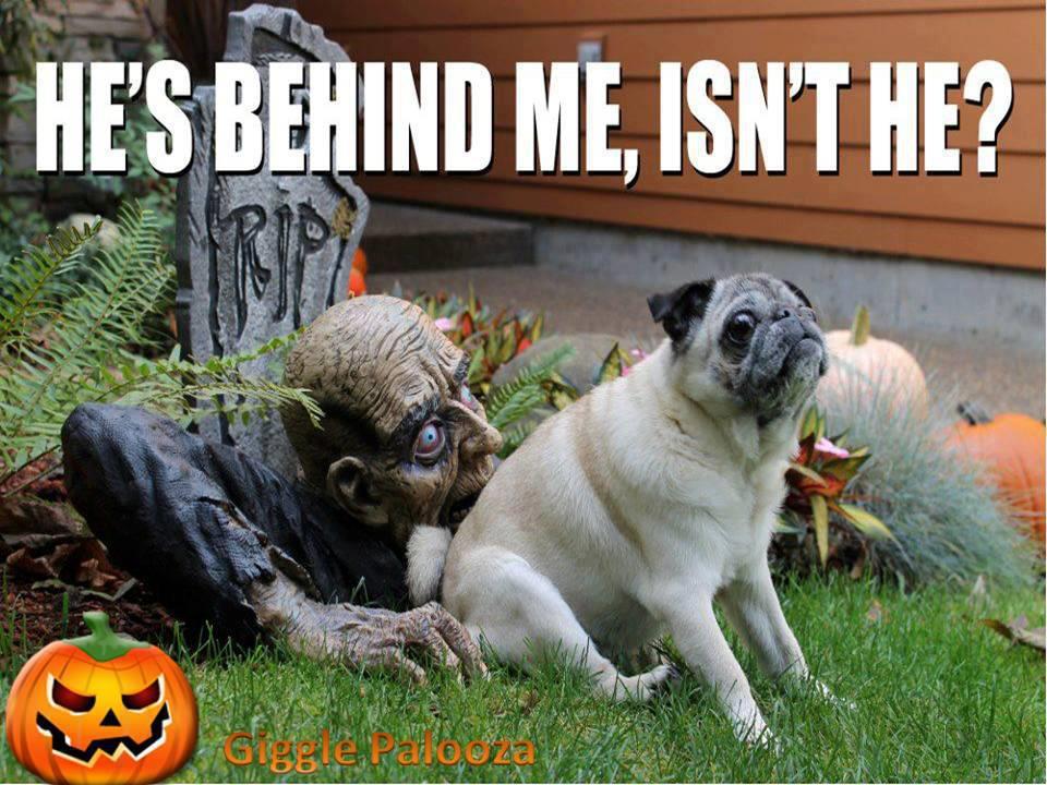 halloween-with-dog
