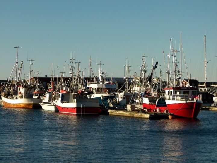 Bodo Harbour 2