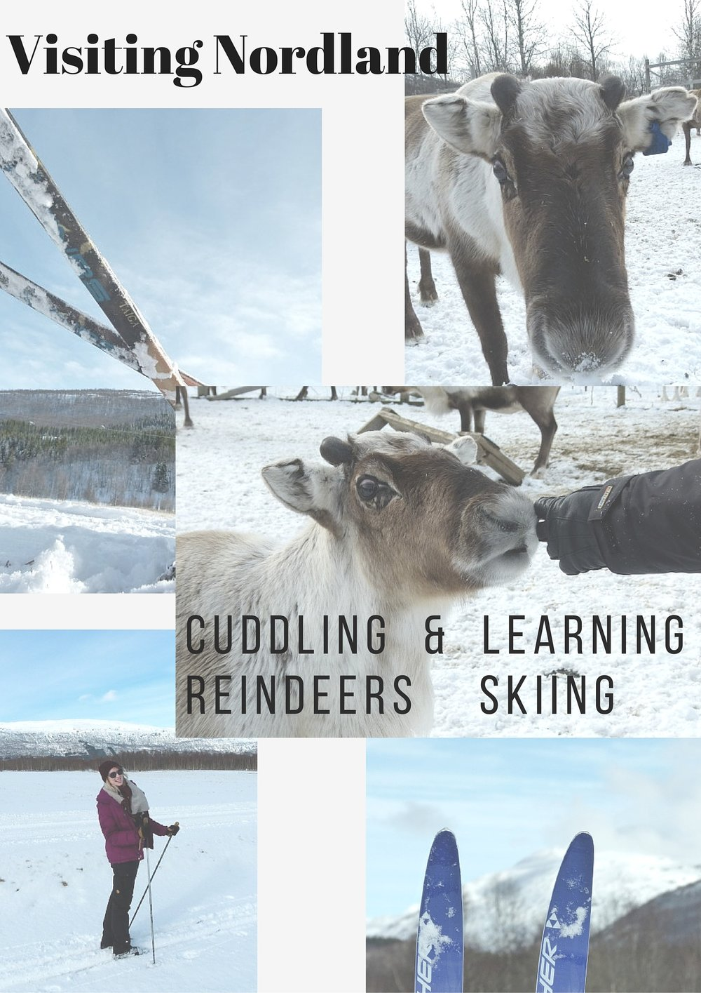 You know what you could do on a holiday in Northern Norway? Learning how to ski and cuddle reindeers!! Interested?