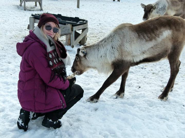 Reindeer 10