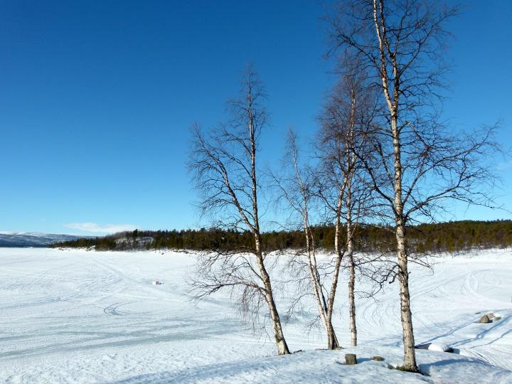 Swedish-Cabin-29.jpg