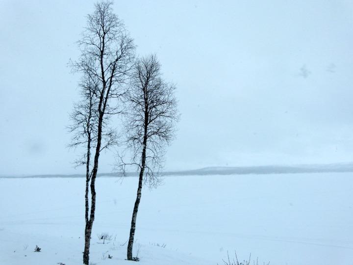 Swedish-Cabin-8.jpg