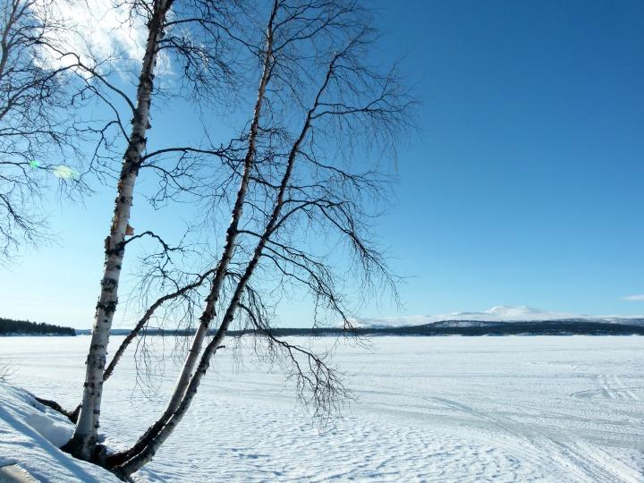 Swedish Lapland 10