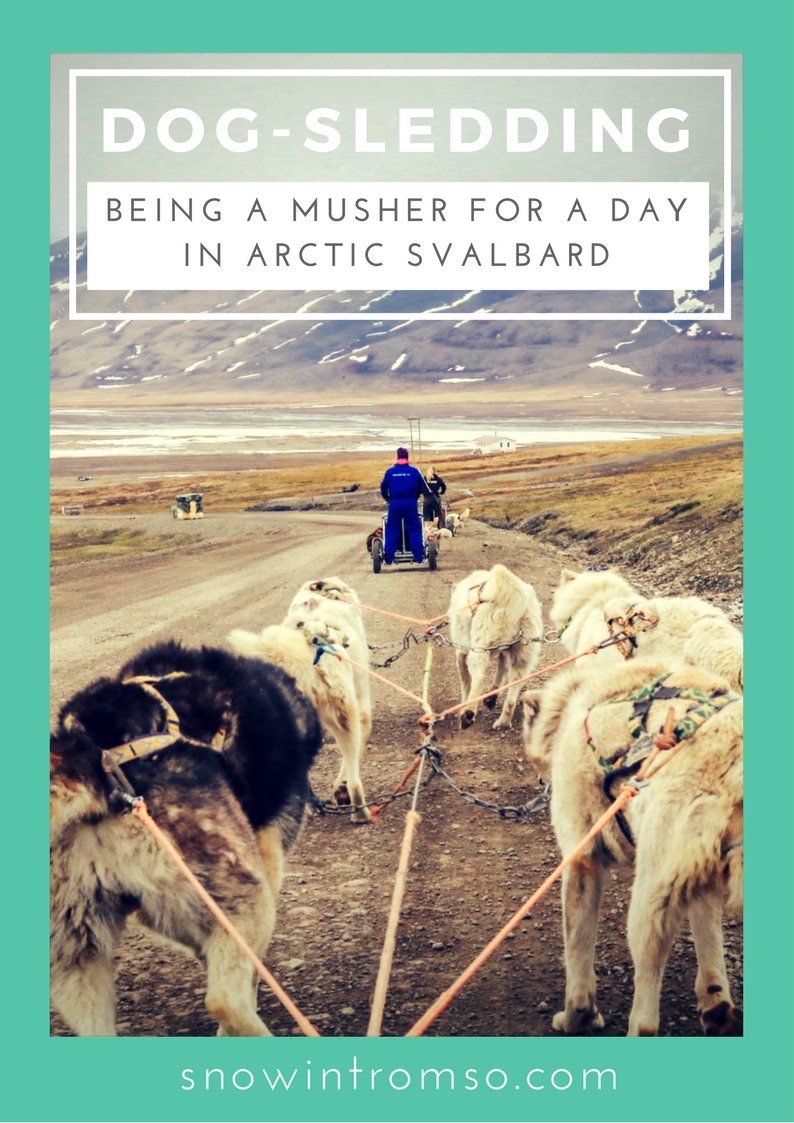 Are you dreaming of going dog-sledding one day? Click through to read all about my experience being a musher for a day in Svalbard!