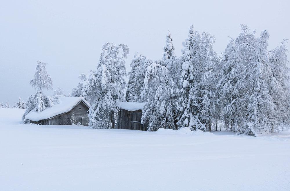 visit reindeer farm finland