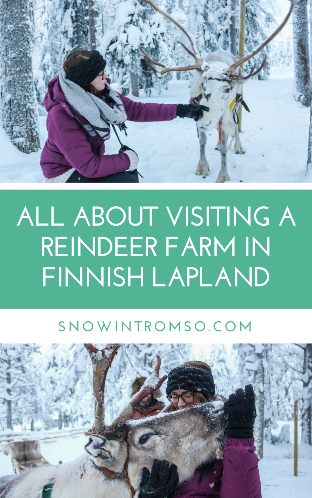 Would you like to pet a reindeer one day? @snowintromso takes you on a virtual trip to a reindeer farm in Finnish Lapland!