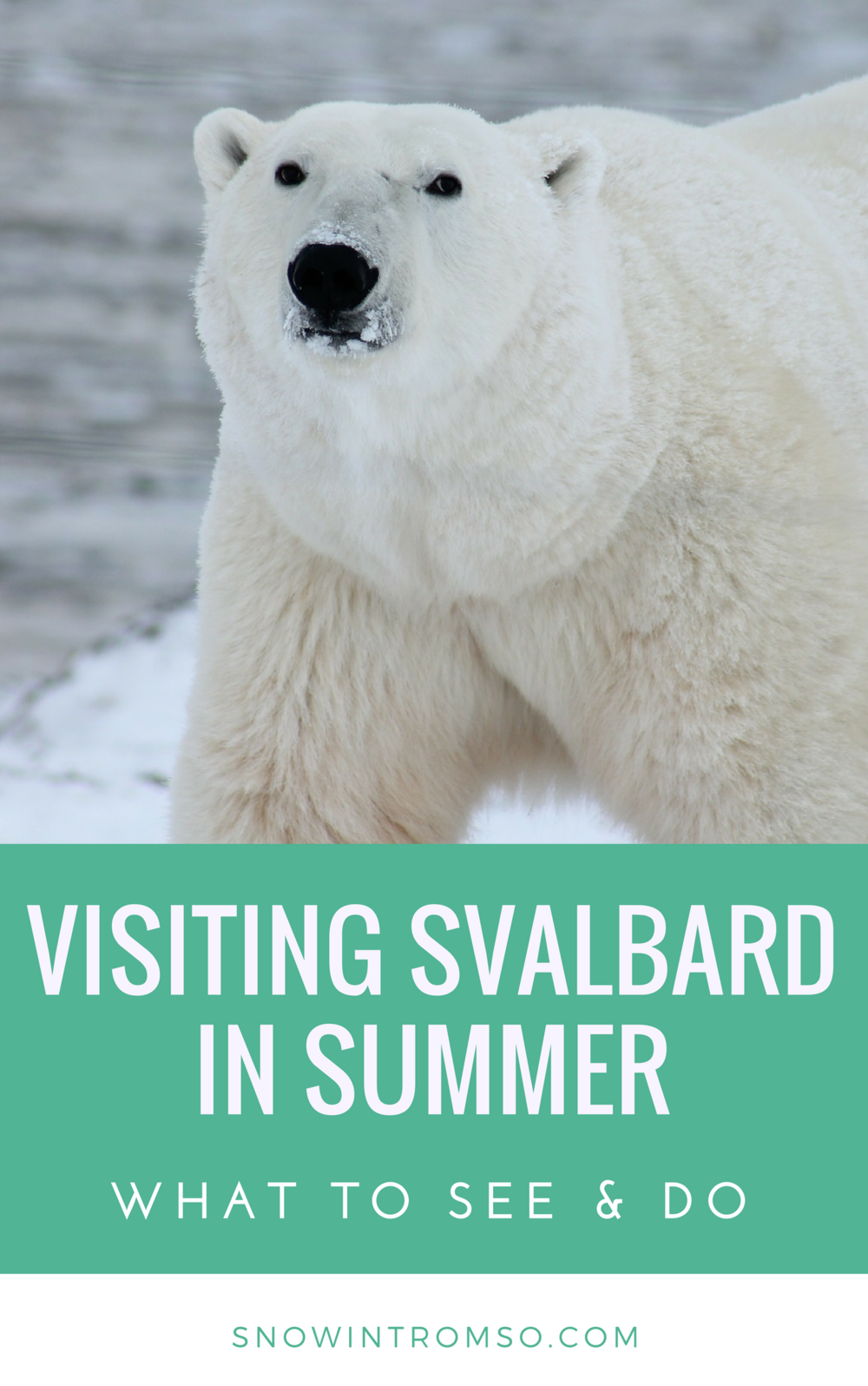 Considering a visit to Svalbard in summer? Click through to see what there's to see and do in the High Arctic at that time of year!