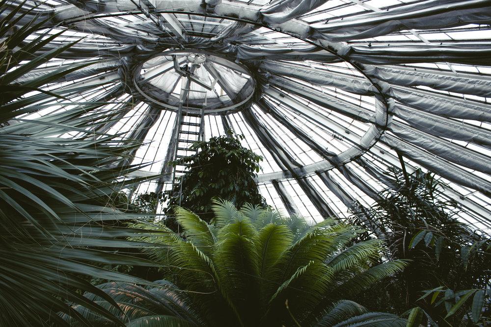 palm house botanical garden copenhagen on a rainy day.jpg