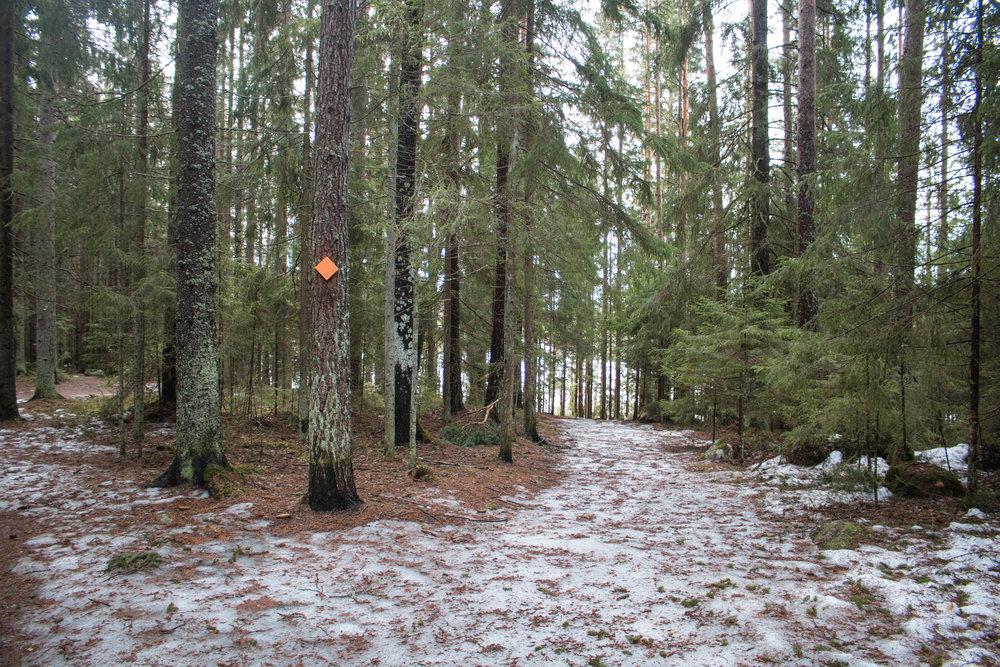 national park finland.jpg