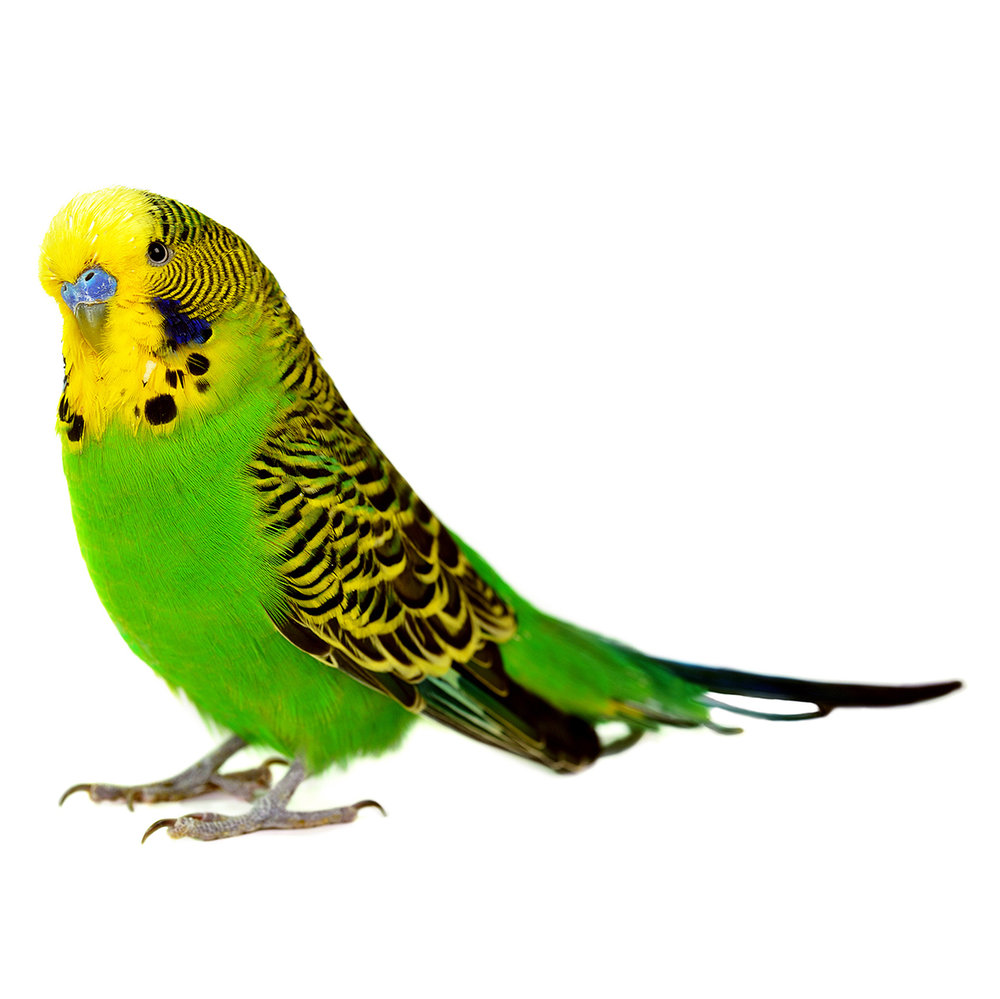 green-bird-white-background.jpg