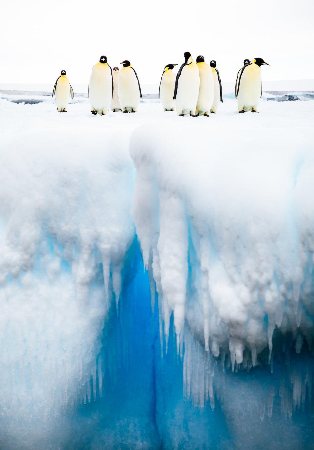 apeacock_antarctica_170128-44562.jpg