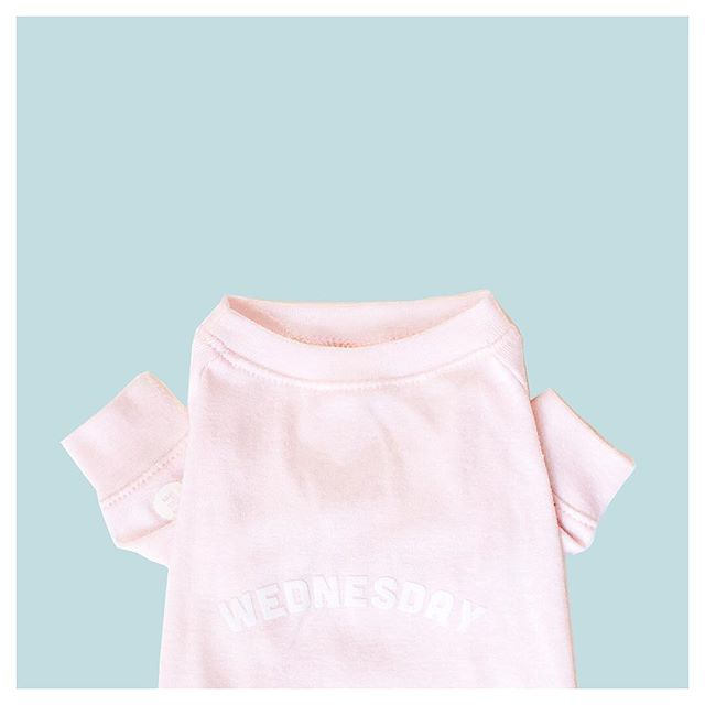 What do we wear on Wednesdays? #Spoiler 🎉 . We're happy to report that everything is going so well this week & we'll be able to update this weekend 🤩!! Wednesday tee is a very lightweight, baby pink tee💓 It's 1 of 3 pink items in this update, so look out for more pink spoilers this week😆 . . . . #StudioEloise #madeinnyc #petfashion #dogfashion #dogsinclothes #fashiondog #fashionpet #dogclothing #dogclothes #dogapparel #doghoodie #dogsinsweaters #locallymade #dogsofnyc #nycdogs  #buzzfeedanimals #poshpamperedpets #dogfessional #dogmodel #furbaby #smalldog #tinydog #thinkpink #onwednesdayswewearpink #prettyinpink