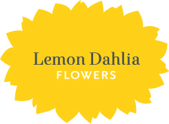 Lemon Dahlia Flowers