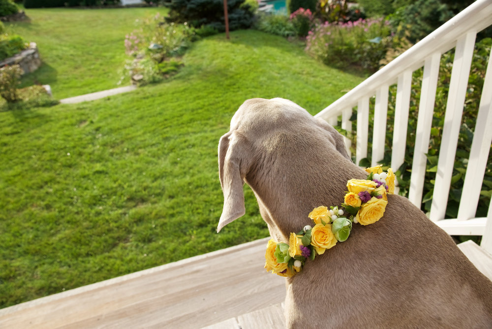 floral dog collar.jpg