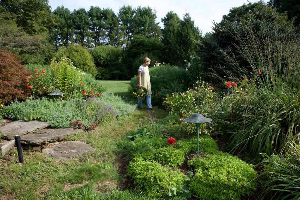 Lemon dahlia gardens.jpg