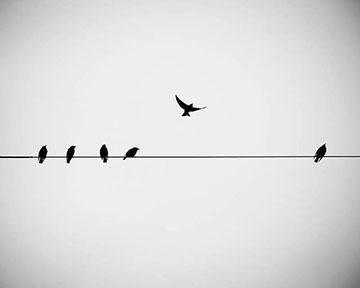 bird-on-wire.jpg