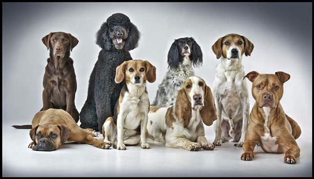 CTC Dogs 2016.jpg