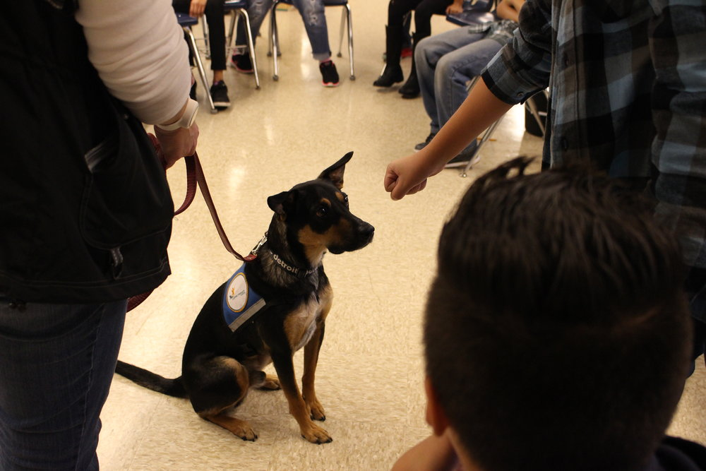 Therapy dog Rocko eagerly awaits instruction from participants.