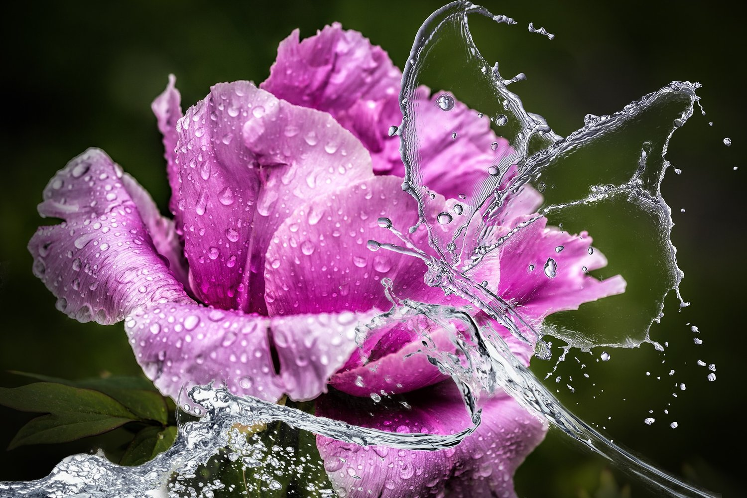 Raise Your Words Not Voice It Is The Rain That Grows Flowers Not