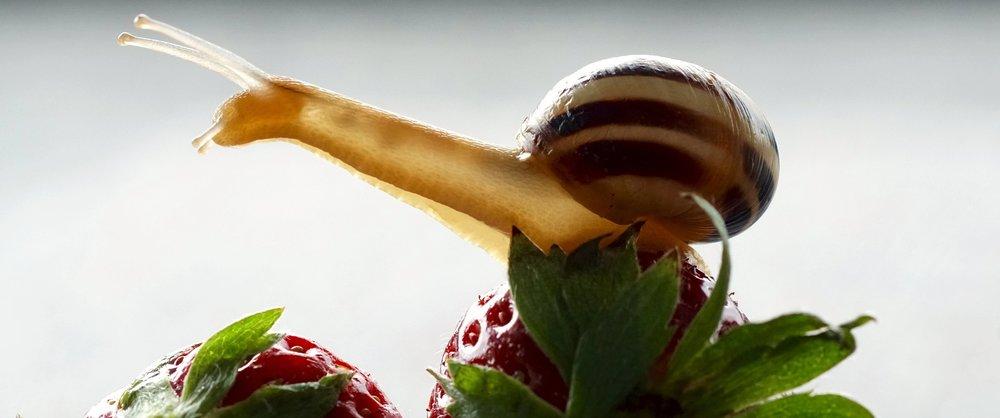 snail-2247217_1920.jpg