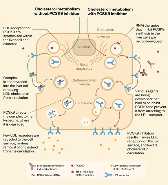 1068547_cholesterol-metabolism-and-pcsk9-inhibitors-15.jpg