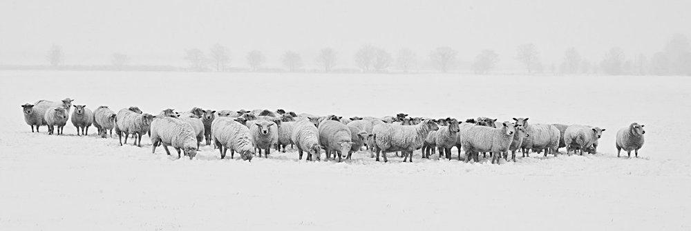 winter-1142029_1280.jpg